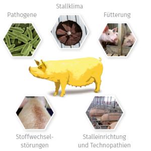 Grundrauschen beim Schwein
