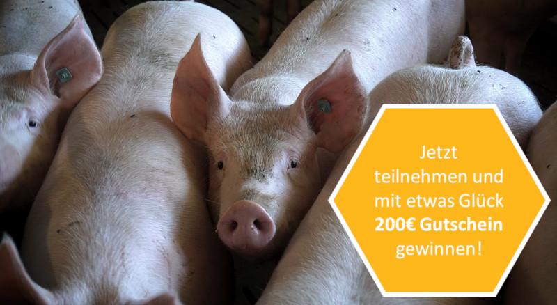 Jetzt teilnehmen und mit etwas Glück 200€ Gutschein gewinnen!