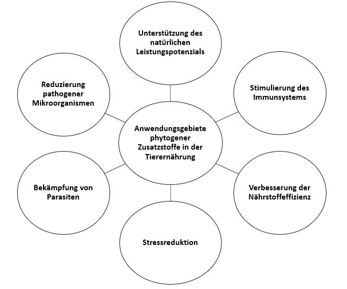Anwendungsgebiete phytogener Zusatzstoffe