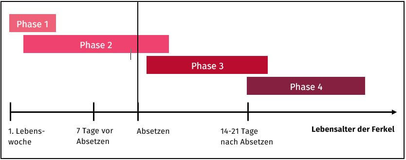 Grafik zu den Umstellungszeitpunkten der Fütterungsphasen von Ferkeln in Abhängigkeit der Futteraufnahme während der Säugezeit